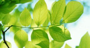 Rüyada Ağaç Yaprağı Görmek